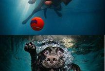 honden onderwater! soort van gremlins