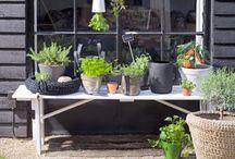 Deck ideas / by Lane McNab Interiors
