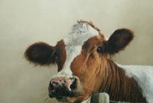 Bruin witte koe