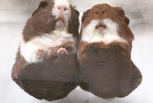 Piggy piggy, oink oink