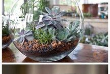 Cactus y suculentas (y otras hierbas!)