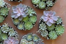 succulent centre pieces