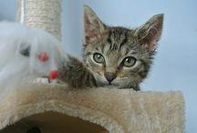 Beasty♥ / Meine kleine Katze Beasty und ihre Abenteuer bzw ihre Fotogene Seite
