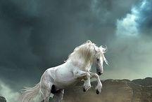 white (grey) horse