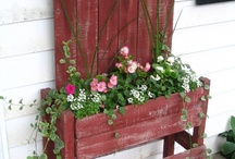 Garden and Home ideas / by Monica V