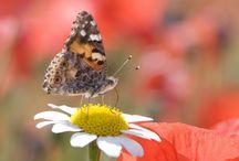 Beautiful Butterfly In White Flower HD Wallpaper   Famous HD Wallpaper