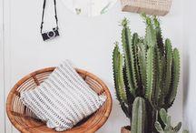 Cactus   Suculentas   Plants