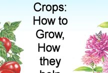 Gardening cover crops