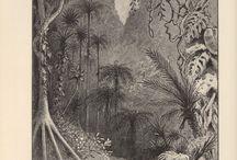 Darwin / Natural Science & Darwin