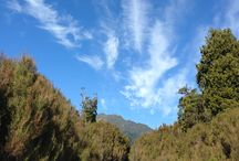 Kumara / Kumara. West Coast. South Island. New Zealand.