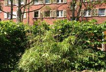 nordengarten / ein Garten im Nordend