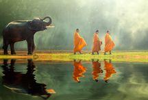 Thailandia / Maestosi templi, tesori culturali, natura incontaminata, spiagge da sogno, cibi delicati. La Thailandia è un paese mistico ed esotico: un'armonia di scenari e tradizioni che restano nel cuore per sempre.