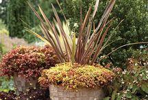 gradina decor garden
