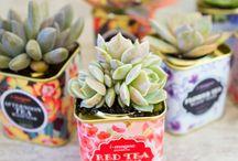 ♥ SUKKULENTE / Kleine kakteenartige Pflanzen in hübschen Gefäßen