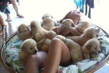 #puppylove