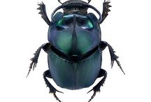 Dung beetles / Dung beetles and Bernard Doube: the science and the fun