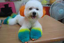 *Dog Grooming