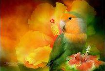 oiseaux peinture / oiseaux