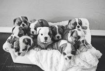 :) cuccioli