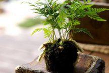 terrarium and plants