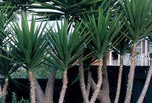 Tipo de plantas de jardim