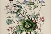 Botanical / Floral