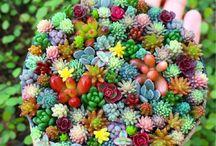 ガーデン  フルーツ  花