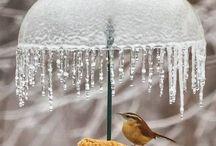 Bird house and feeders