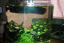 nano tanks and shrimp bowls