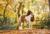Herfstshoot Paarden / www.merelbakkerfotografie.nl Fotografie Alkmaar. Portretfotografie - Loveshoots - Vriendinnen shoots - Familieshoots - Paardenfotografie