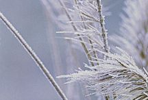 Frost Kissed Lawns / The beauty of the cold weather, frosty lawns, flowers and gardens #LoveYourLawn