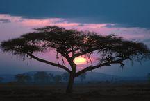 Under an African Sun / Whats more inspiring then an African sunrise and sunset.