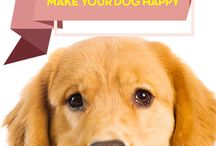 Dog aggressive/training