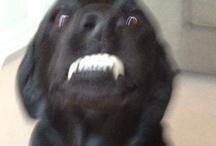 Lucydog