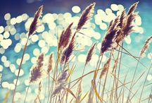 Enjoy || Sunshine