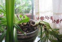 Indoor Gardening / Tips for growing greenery indoors.
