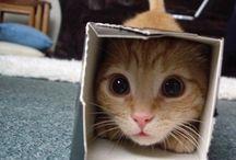 """Cute Critters / Things that make you go """"Aaaaaawwwwwww!!"""" / by Chele Rutan"""