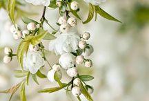 flores brancas pendentes