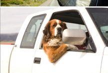 Dogs in Cars! / by DARCARS Automotive Group
