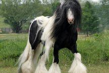 Hevostelut