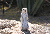 Desert Creatures / Some of the cute (and not so cute) creatures I've seen in the desert.