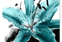 Flowers, flowers, flowers! / by Karen Dionis