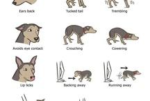 Körpersprache und Ausdrucksverhalten