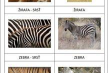 Zvířata zoo