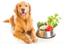 Pet News from PetPlus' Paw Prints / Articles from our PetPlus blog, The Retriever