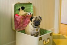 Pugs / by Lynai Miller