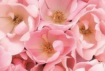 (flowers)