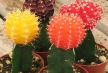 vetplants