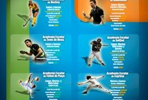 Organización del Deporte / El deporte a los diferentes niveles organizativos