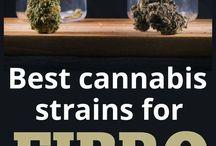 Many 420
